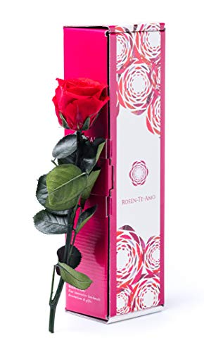 Rosen-Te-Amo, rote konservierte ewige Rose (27 cm)...